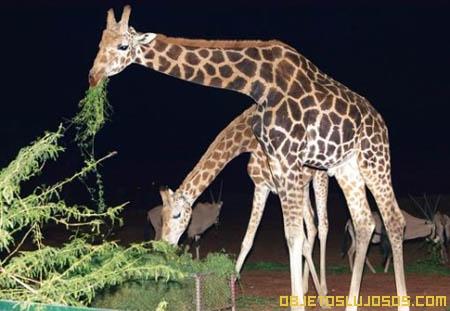 Al-Ain-Wildlife-Park