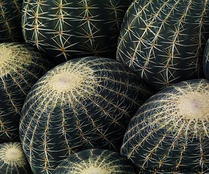 puf con estampado de cactus