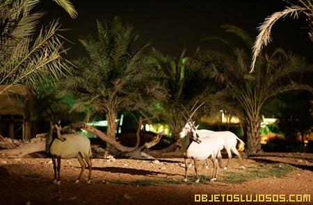 Zoologico-nocturno