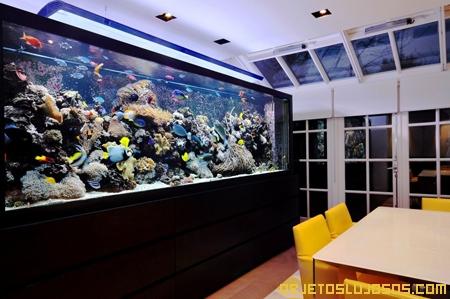 acuario-de-Stephen-Ireland