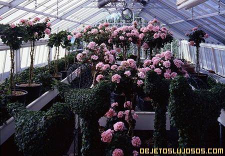 invernadero-con-rosas
